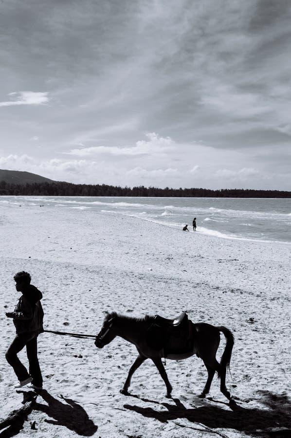 Songkhla, Tailândia - imagem da silhueta do cavalo do pônei e do seu proprietário que andam na praia famosa de Samila na temporad fotos de stock