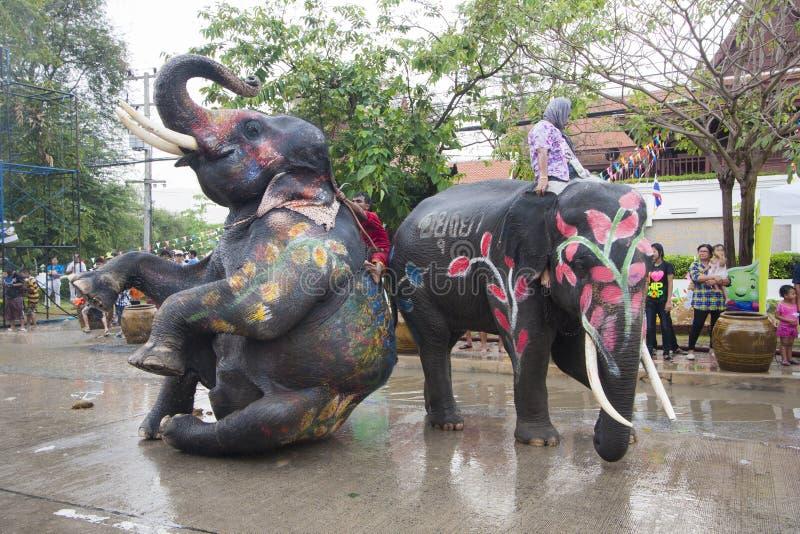 Songkran festival med elefanten AyuttayaThailand royaltyfri bild