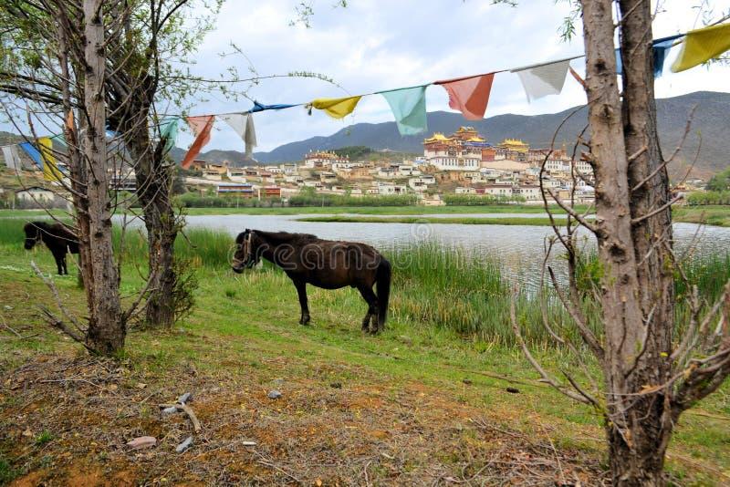 Songzanlin buddistisk kloster i Zhongdian royaltyfri fotografi