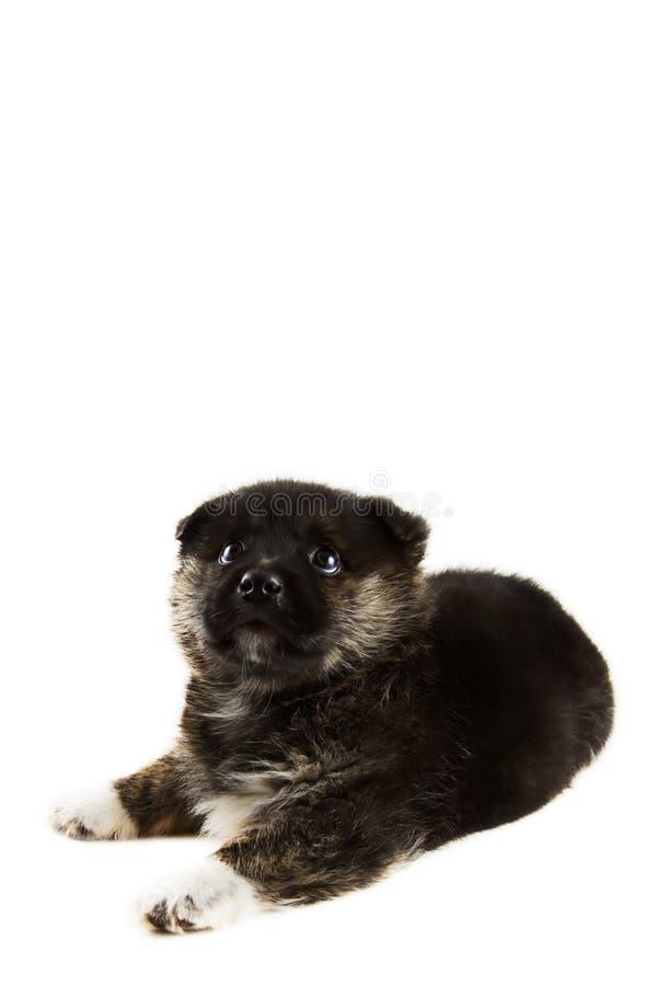Sonhando o filhote de cachorro fotos de stock royalty free