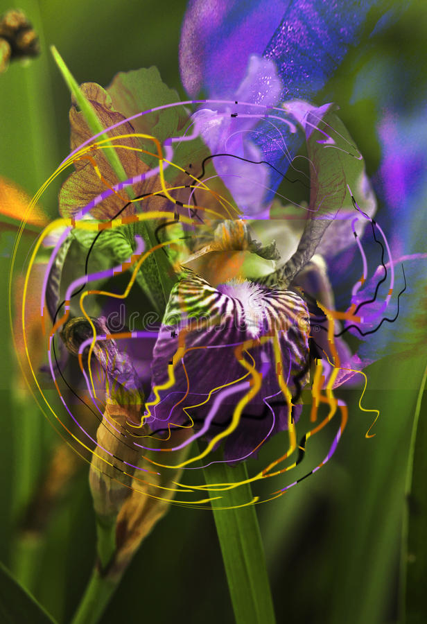 Sonho da orquídea imagem de stock royalty free