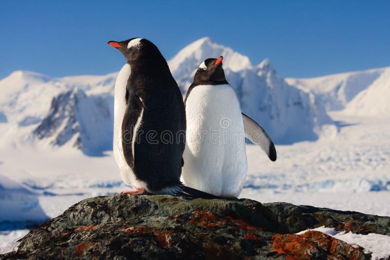 Sonho de dois pinguins foto de stock royalty free