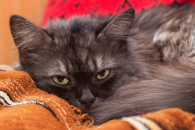 Download Sonho fumarento do gato foto de stock. Imagem de doméstico - 80100694