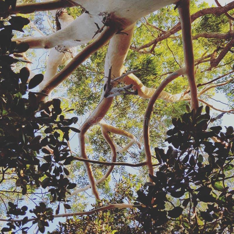 Sonho superior da árvore com antepassados foto de stock royalty free