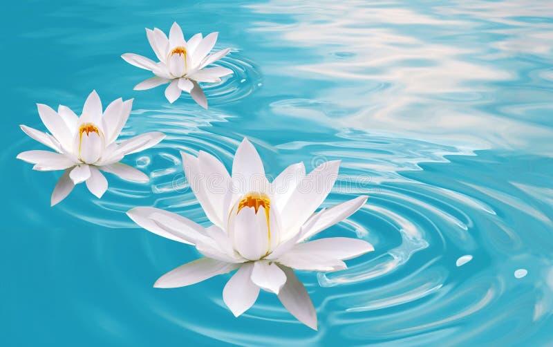 Download Sonhos de Waterlily foto de stock. Imagem de florescer - 10050564