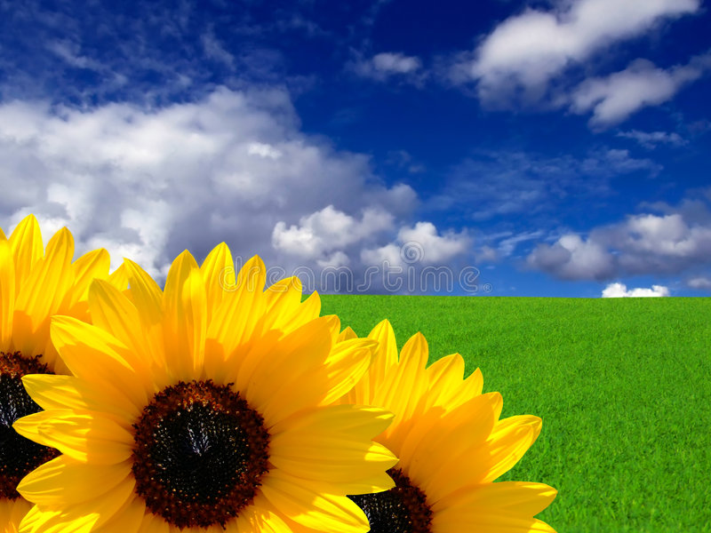 Sonhos do verão imagens de stock royalty free