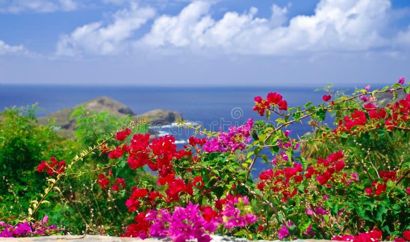 Sonhos tropicais fotografia de stock royalty free