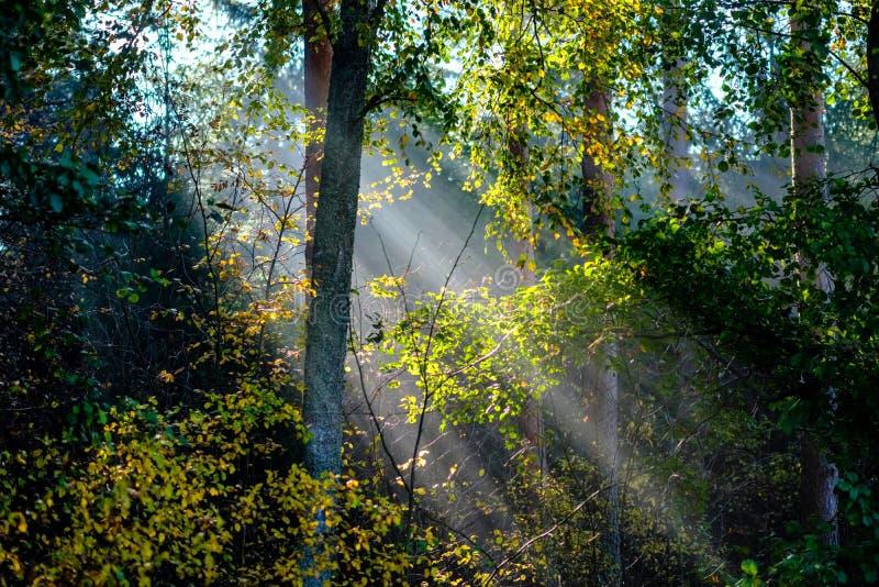Sonne reys durch Herbst färbten Baumblätter lizenzfreie stockbilder