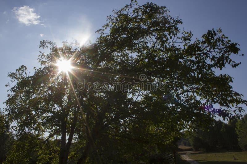 Sonne versteckt unter Ästen stockfoto