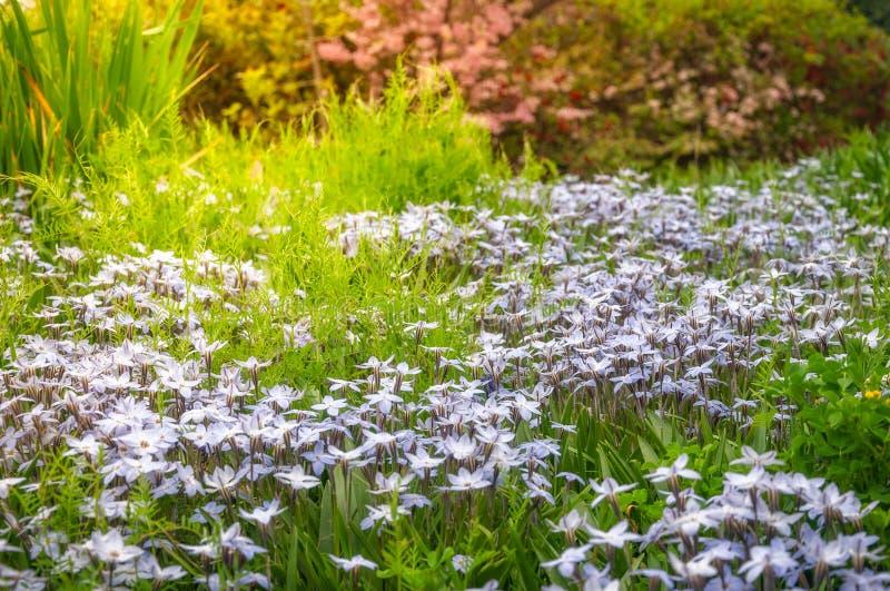 Sonnen-geküsste Wiesen an Floriade-Festival in Canberra stockbild