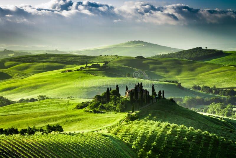 Sonnenaufgang über Bauernhof von Olivenhainen und von Weinbergen in Toskana stockfotos
