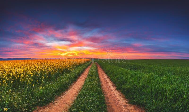 Sonnenaufgang über dem Rapssamen- und Weizenfeld, schöner Frühlingstag Pfad auf den Gebieten lizenzfreies stockfoto