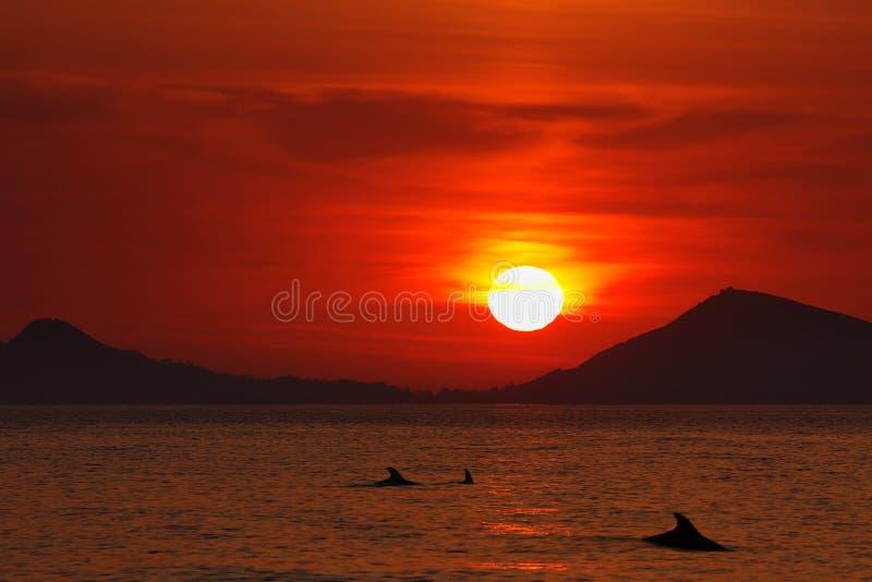 Sonnenaufgang über dem Schwarzen Meer Schattenbilder der Delphine an der Dämmerung stockbild