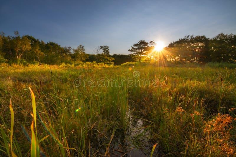 Sonnenaufgang über einem Sumpf im Acadia-Nationalpark lizenzfreies stockbild