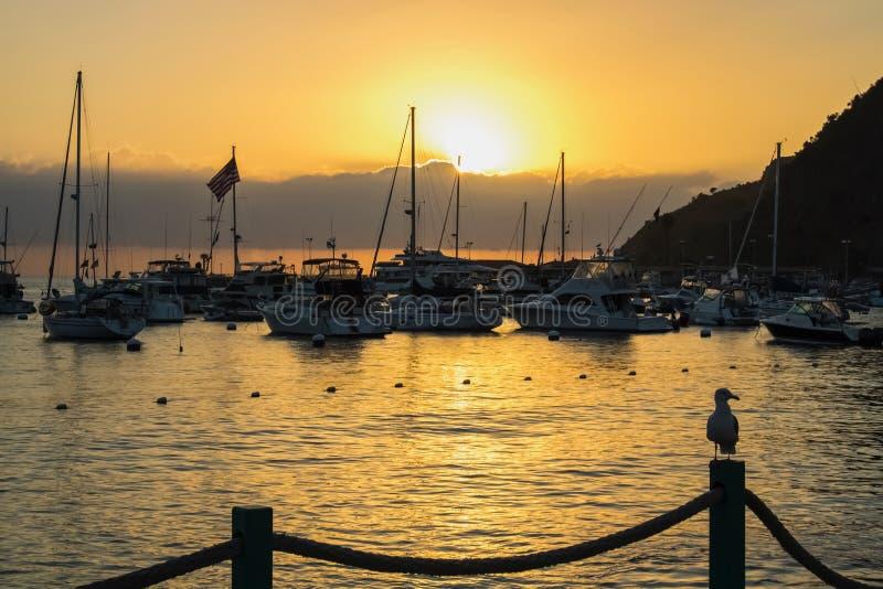 Sonnenaufgang über Hafen mit Booten und Flagge und Seemöwe in Profil O stockfoto