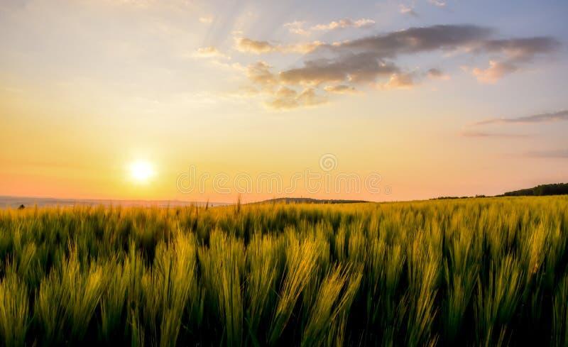 Sonnenaufgang über Weizen stockfotos