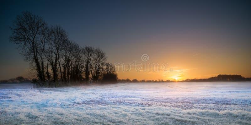 Sonnenaufgang auf bereiftem Baum gezeichnetem Feld stockfotografie