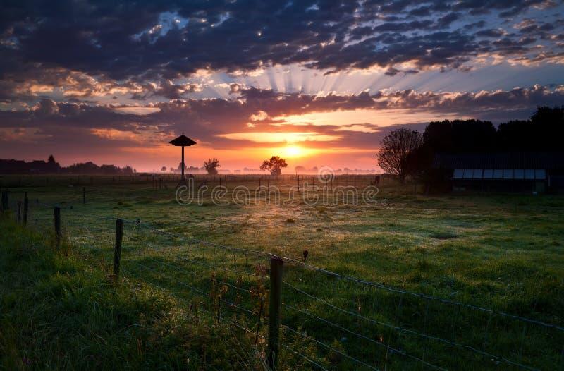 Sonnenaufgang auf holländischem Bauernhof im Nebel lizenzfreies stockbild
