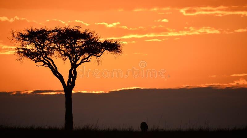 Sonnenaufgang auf Masai Mara stockfoto