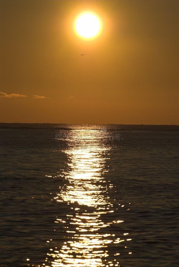 Sonnenaufgang auf Schwarzem Meer mit Seemöweschattenbild stockfotografie