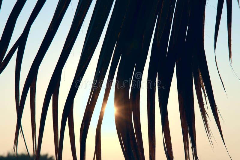 SONNENAUFGANG Betrachten der Sonne durch die Blätter von Palmen stockfotos