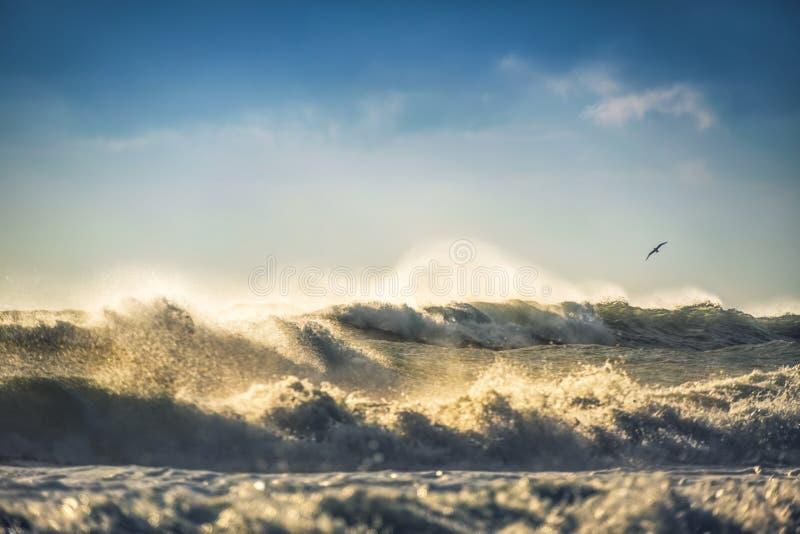 Sonnenaufgang des frühen Morgens über dem Meer und einer Fliegenvogelseemöwe lizenzfreie stockbilder