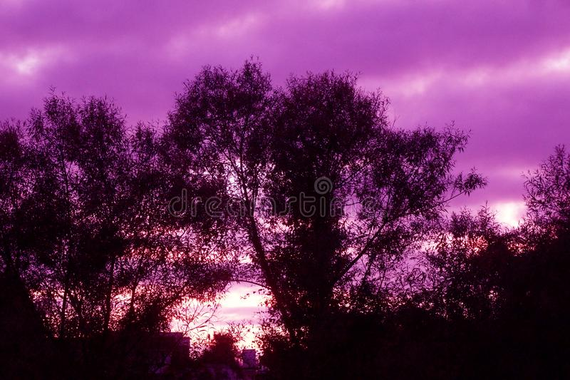 Sonnenaufgang des Frühlings-frühen Morgens in waikato Bezirk von Neuseeland stockfotografie