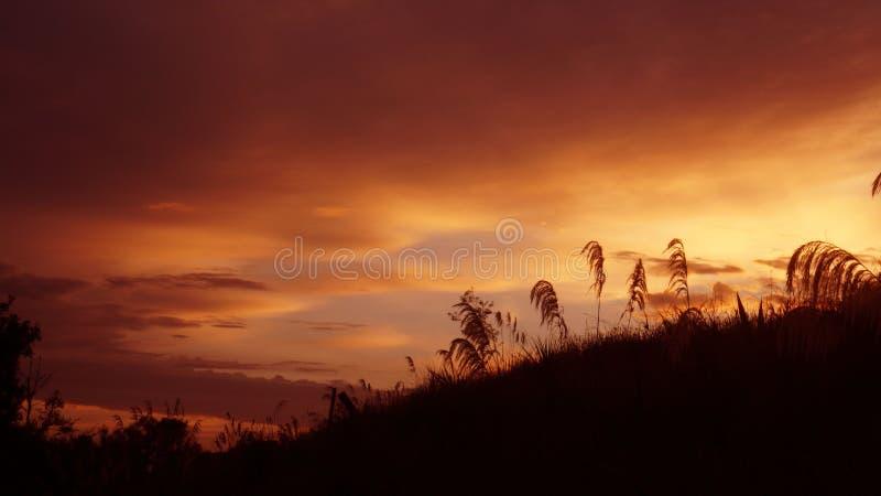 Sonnenaufgang des Frühlings-frühen Morgens in waikato Bezirk von Neuseeland lizenzfreies stockbild
