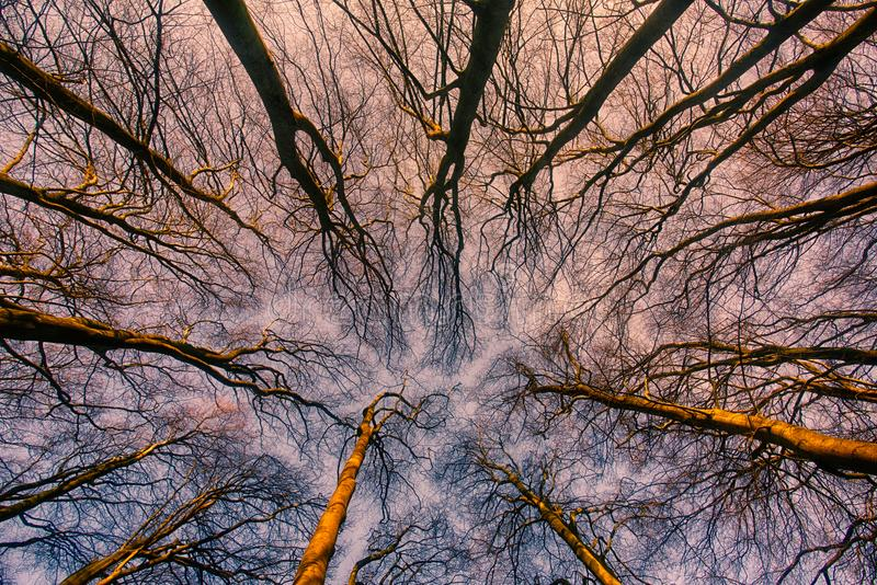 Sonnenaufgang durch das froest lizenzfreie stockbilder