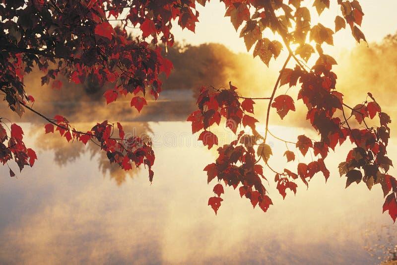 Sonnenaufgang durch Herbst-Blätter stockbild