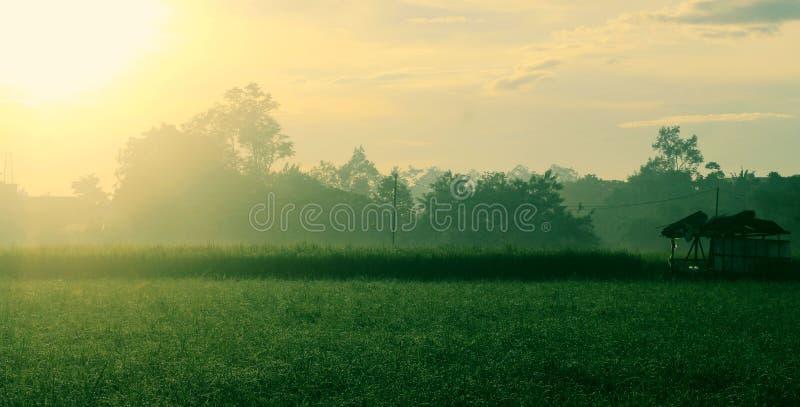 Sonnenaufgang am Feld lizenzfreie stockbilder