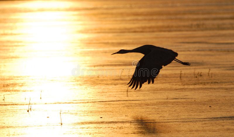 Sonnenaufgang-Flug lizenzfreie stockfotos