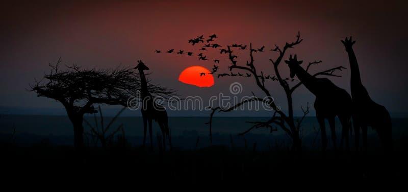 Sonnenaufgang, Himmel, Baum, Phänomen