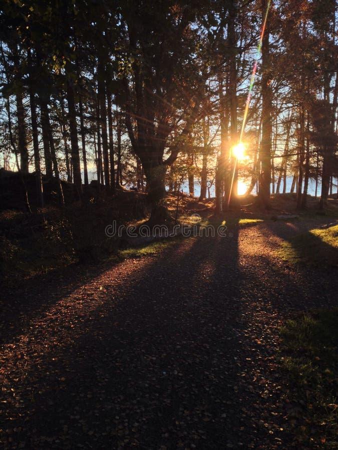 Sonnenaufgang hinter Bäumen lizenzfreie stockfotografie