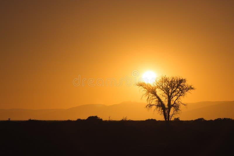 Sonnenaufgang hinter einem Baum in der Namibischen Wüste stockfotos