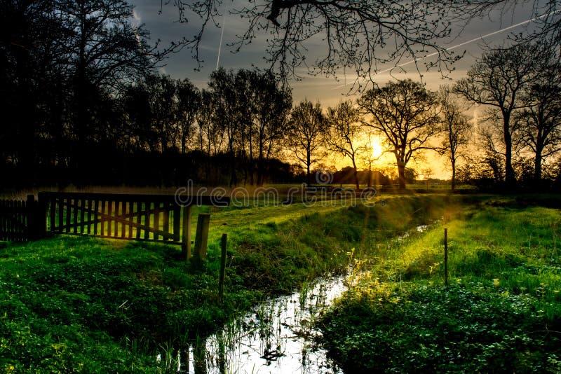 Sonnenaufgang im Holz lizenzfreie stockbilder