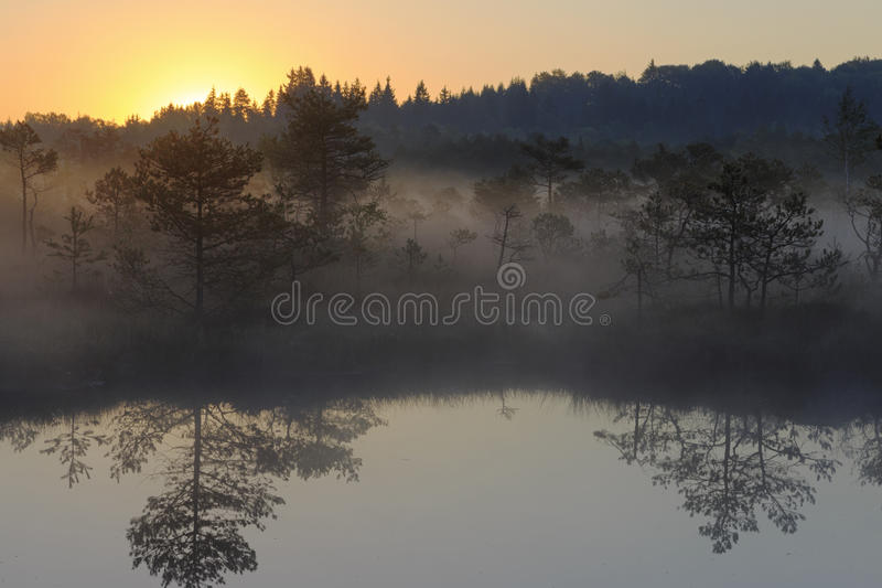 Sonnenaufgang im nebelhaften Sumpf stockfotografie