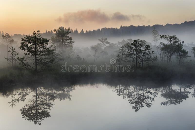 Sonnenaufgang im nebelhaften Sumpf während des Sommers stockbild