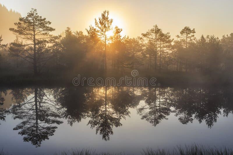 Sonnenaufgang im nebelhaften Sumpf während des Sommers stockfotos