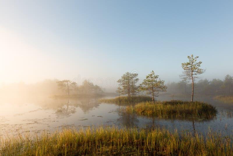 Sonnenaufgang im nebeligen Sumpf stockfotos