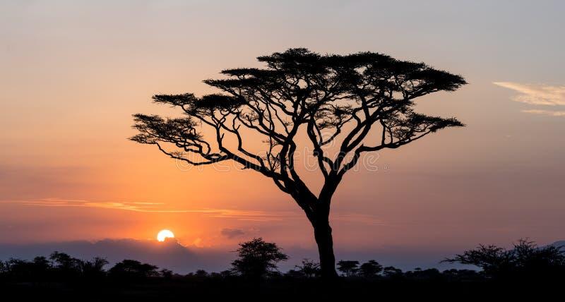Sonnenaufgang im Serengeti, Tansania stockfotos