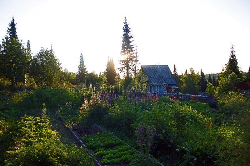 Sonnenaufgang im Sommerdorf lizenzfreies stockfoto
