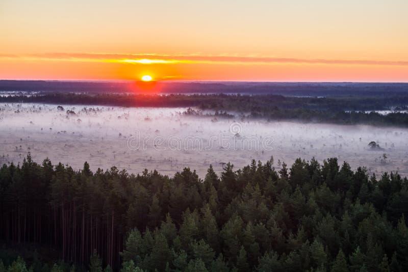 Sonnenaufgang im Sumpf lizenzfreie stockfotos