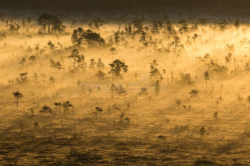 Sonnenaufgang im Sumpf stockfoto