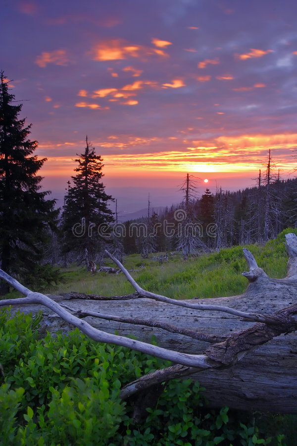 Sonnenaufgang im toten Wald stockfoto