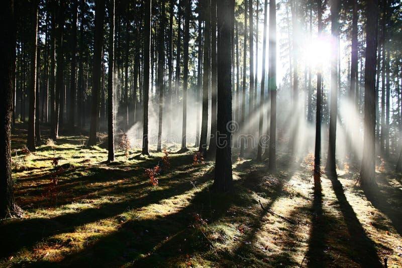 Sonnenaufgang im Wald lizenzfreies stockfoto