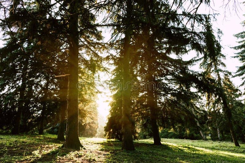 Sonnenaufgang in schönem szenischem lizenzfreie stockfotos