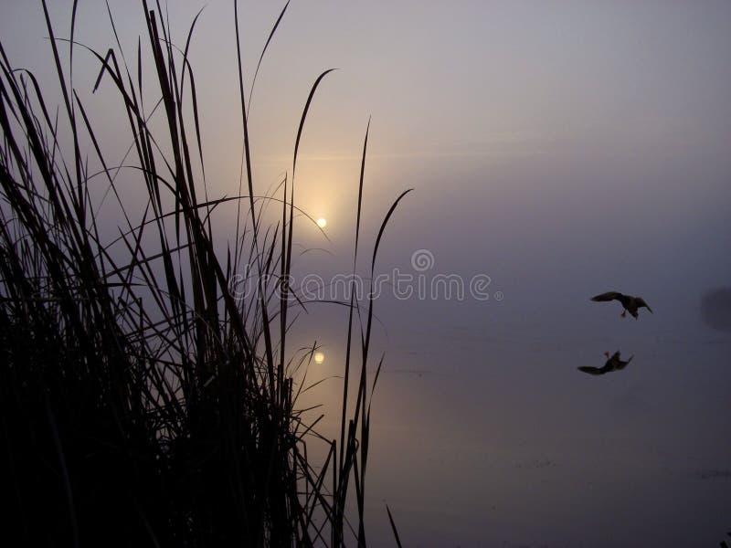 Sonnenaufgang-Stockente lizenzfreies stockbild