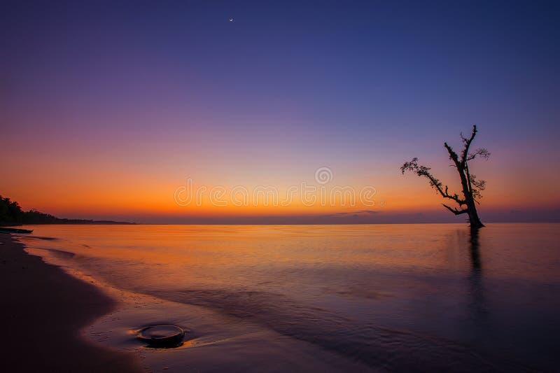 Sonnenaufgang am Strand mit Schattenbildbaum stockbilder