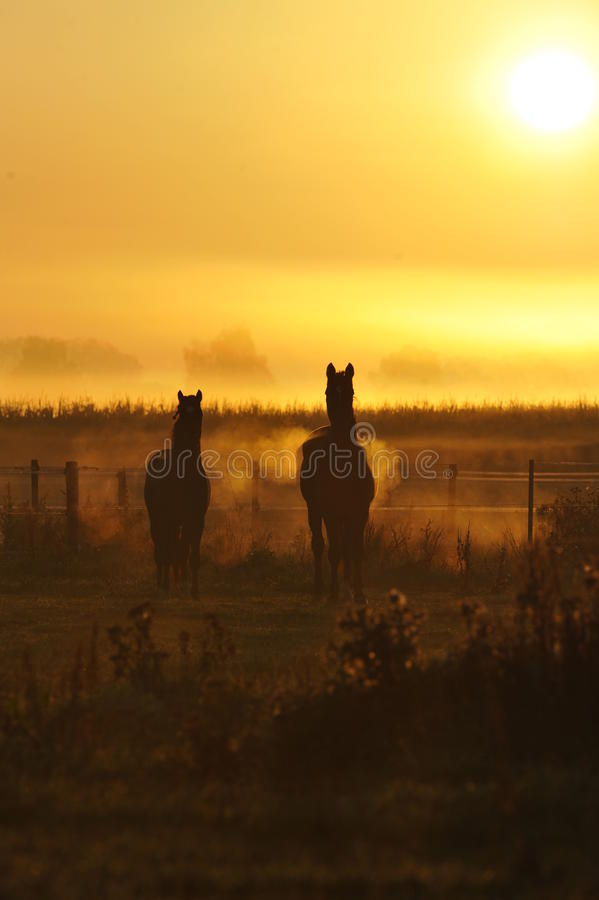 Sonnenaufgang / Sunrise stock image